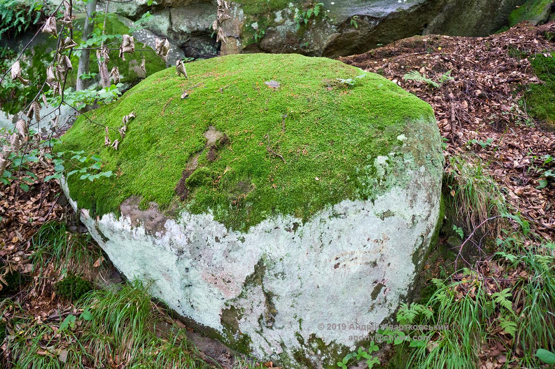 Мох та лишайники на камені