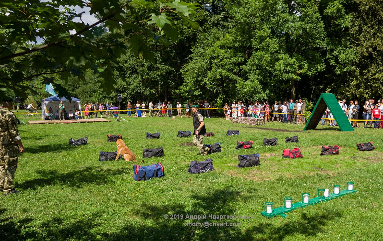 Службова собака шукає вибуховий пристрій у сумках