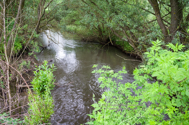 Річка Зубра